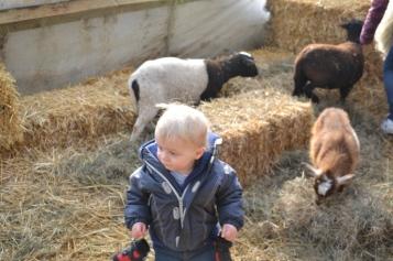 Découverte des animaux de la ferme