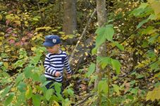Cache-cache dans les feuilles