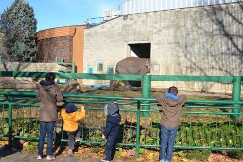 Lucie l'éléphant