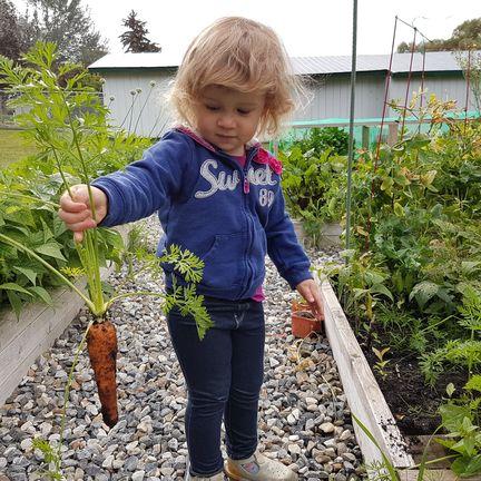 Margaux a passé le week-end à manger les carottes du jardin