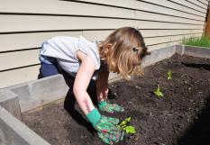 On plante les salades